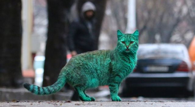Bulgaria Is Home to the First Green Cat in History
