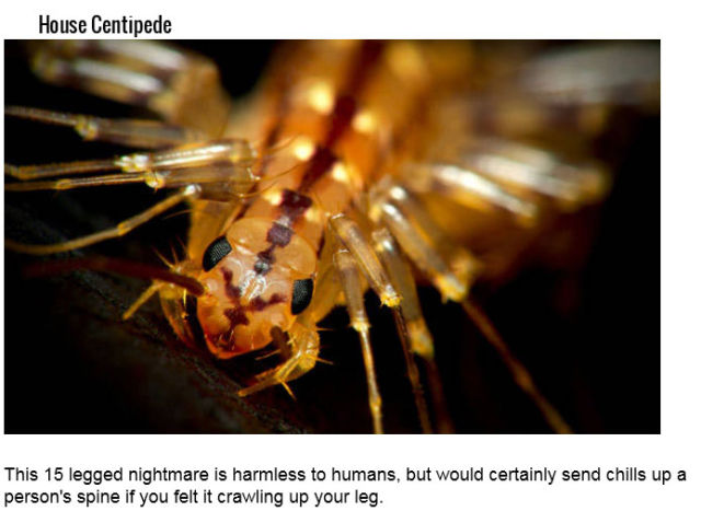 The Deadliest Insects on the Planet