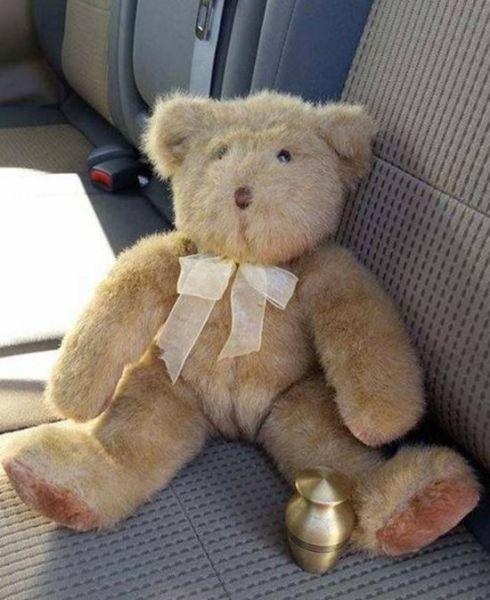 A Stuffed Bear's Eerie Hidden Stash