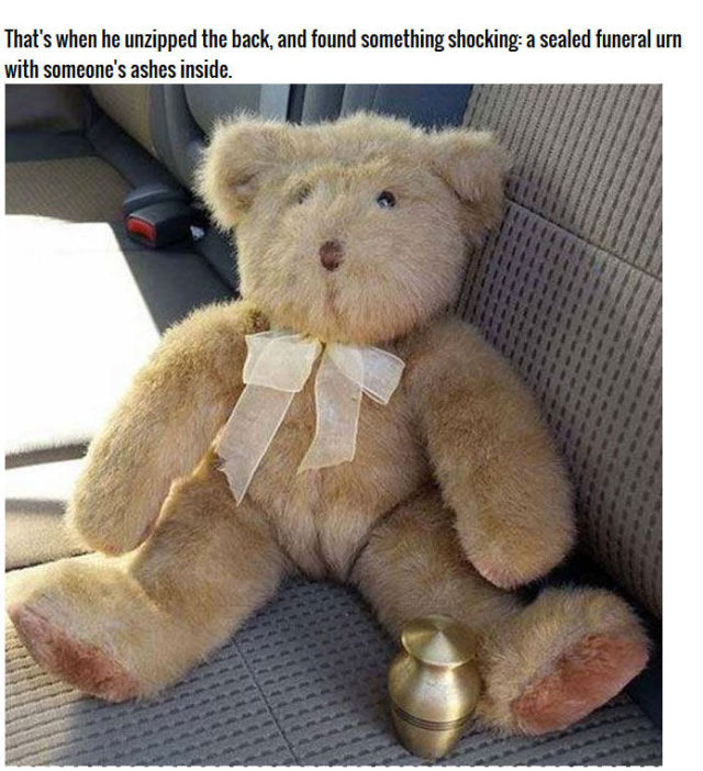 A Stuffed Bear's Eerie Hidden Stash