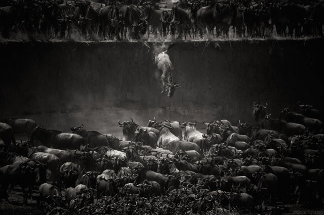 National Geographic Magazine Announced the Photo Contest Winners for 2014