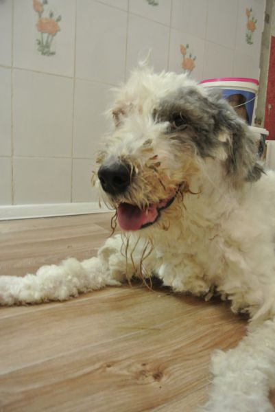 Rescued Ball of Fluff Turns into a Super Cute Dog