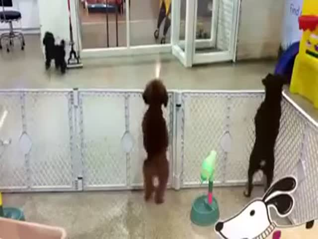 Delighted Puppy Can't Wait to See Owner  (VIDEO)
