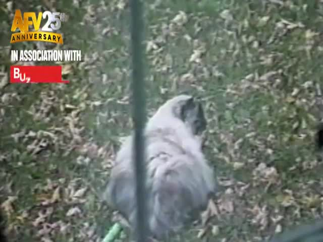 These Cats Are Not Having a Good Time  (VIDEO)