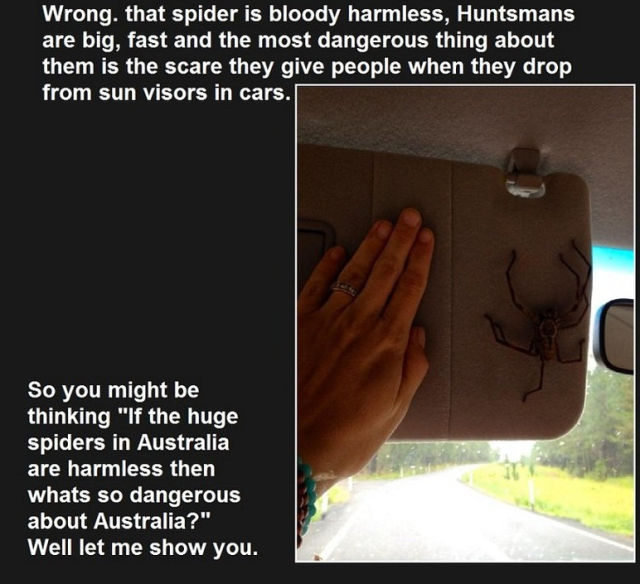 The Most Surprisingly Dangerous Things in Australia