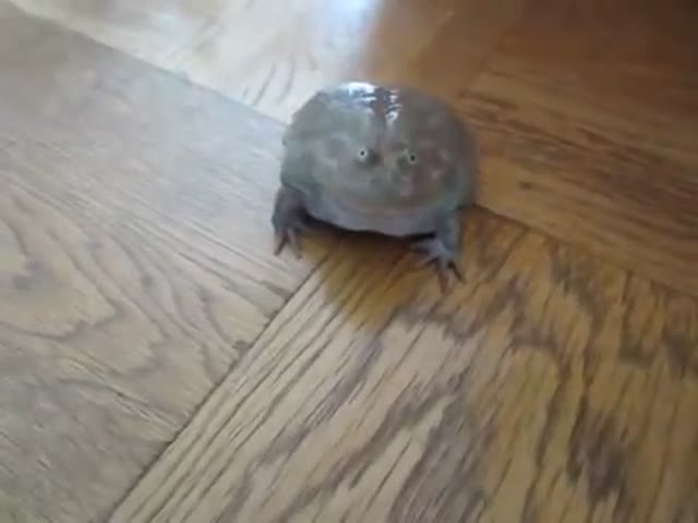 This Frog Is a Real Weirdo