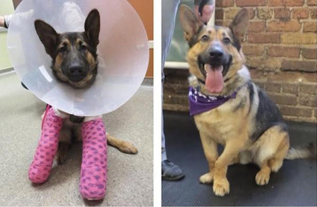 Before and After Pics of Animals Who Have Been Adopted