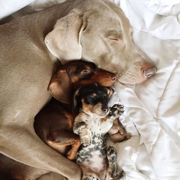 Harlow and Indiana Get a New Puppy Playmate