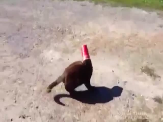 Cat with Head Stuck in Cup Gets Recued by Unexpected Savior
