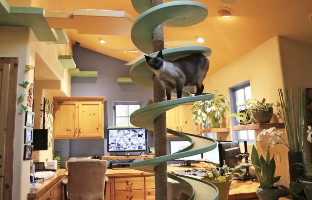 Man Turned His House into an Indoor Cat Playland and It