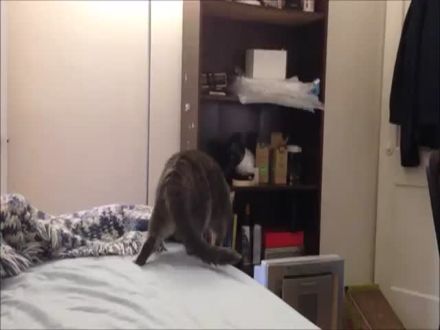 When Cats Go Full Crazy