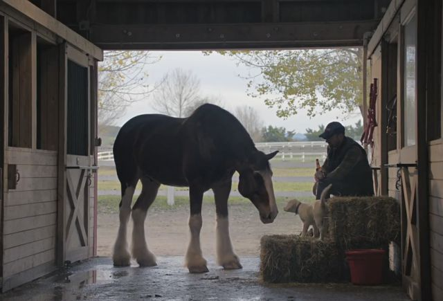 This Budweiser Super Bowl Commercial Is Definitely One to Watch