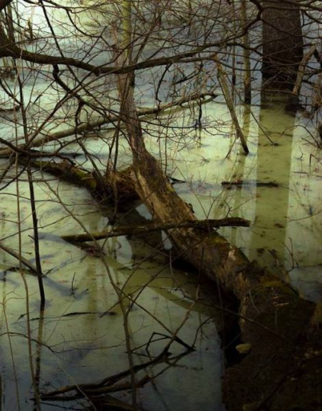 A Very Creepy Swamp Discovery