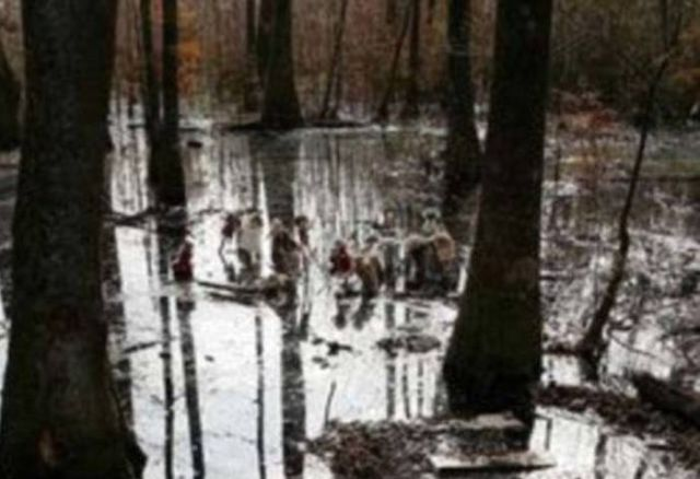 A Very Creepy Swamp Discovery