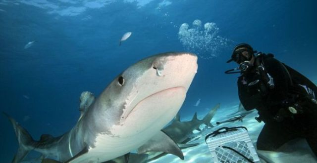 Photographer Gets Up Close and Personal with a Shark's Mouth