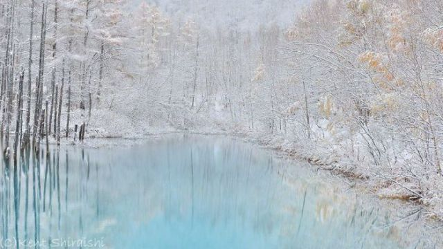 A Stunning Color Changing Pond in Japan