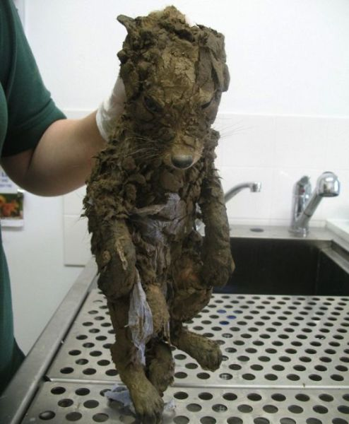 All This Wild Fox Really Needed was a Warm Bath