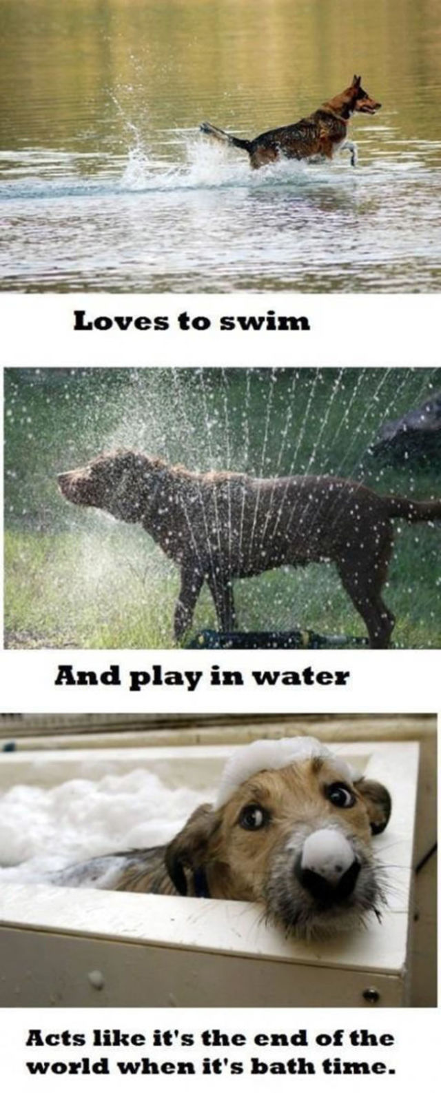 Stuff That Only Dog Owners Can Totally Relate to