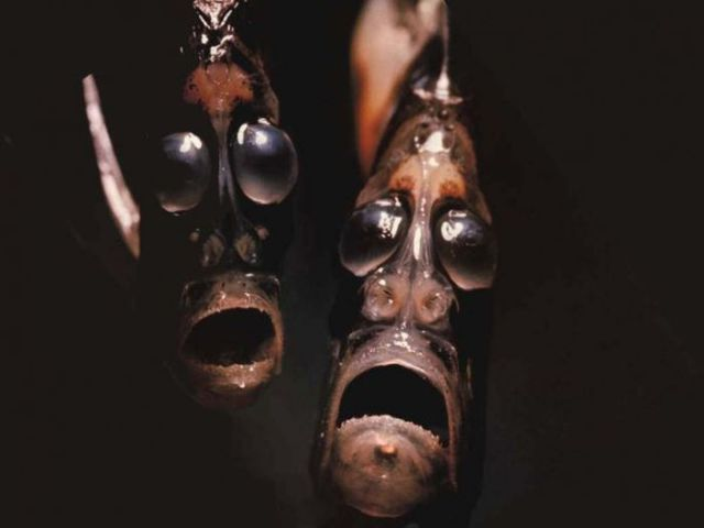 The Most Frightening Ocean Creatures in the World