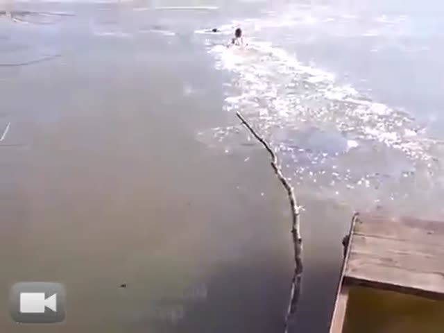 Guy Breaks Through Frozen River to Save a Stray Dog