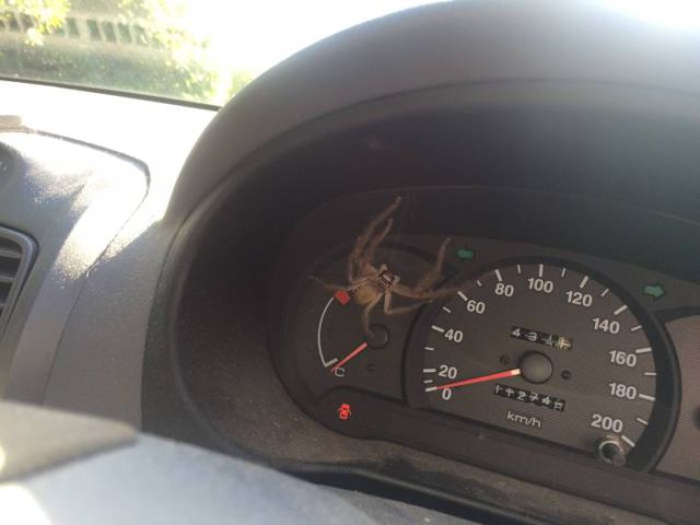 A Scary Surprise Lurking inside a Car