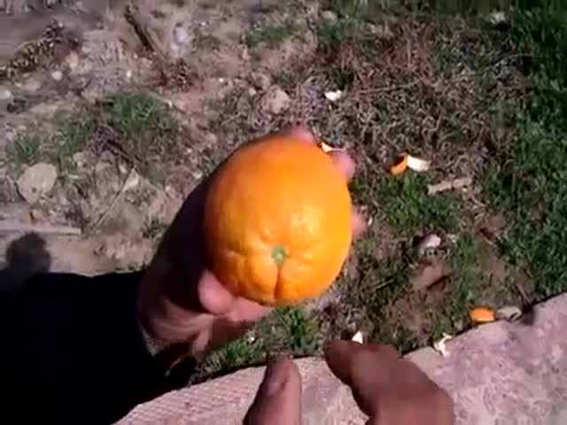 The Ultimate Way to Peel an Orange  (VIDEO)