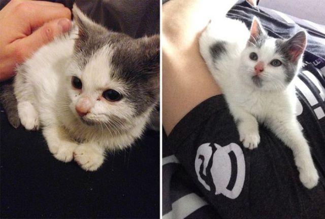 Shelter Animals Are Visibly Happier When They Get a New Home