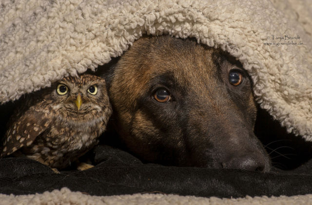 A Sweet Animal Friendship That Is Really Peculiar
