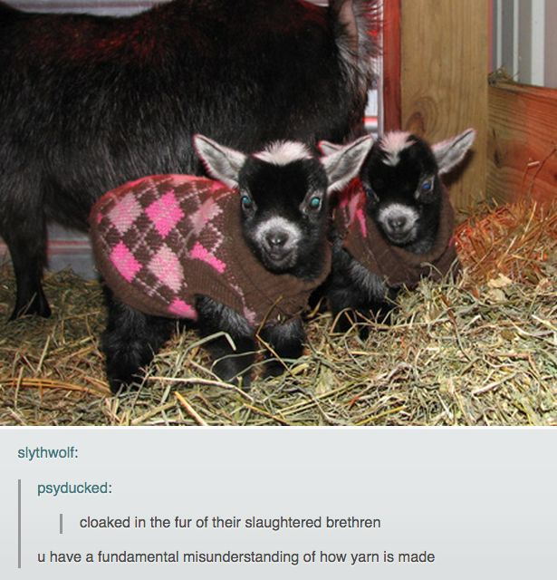 Hilarious Animal Posts on Tumblr