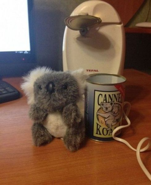 It's Canned Koala for Dinner Tonight