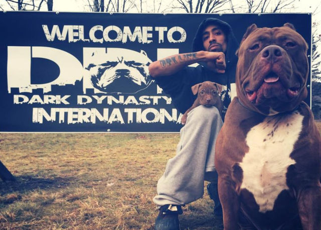 The Biggest Pitbull On the Planet