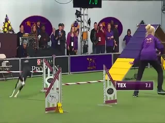 Look at This Insanely Fast Dog Racing through an Obstacle Course  (VIDEO)