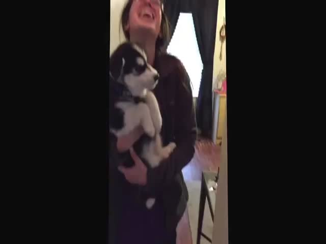 Cute Talking Husky Puppy