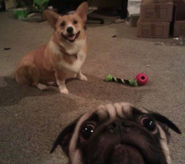 A Bit of Photobombing Awesomeness to Make Your Day