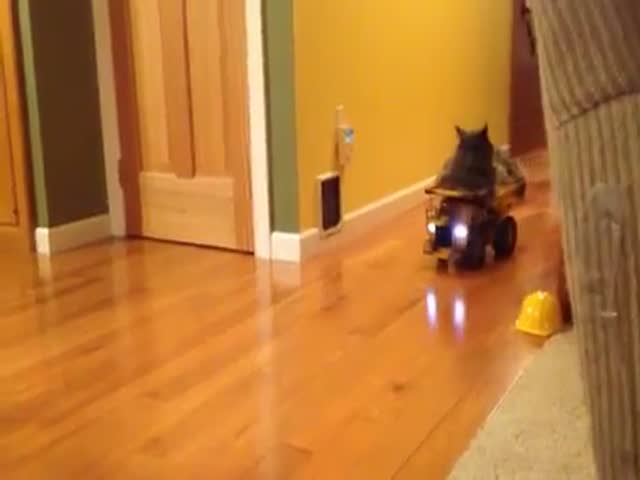 Cat Hitches a Ride on a Toy Dump Truck