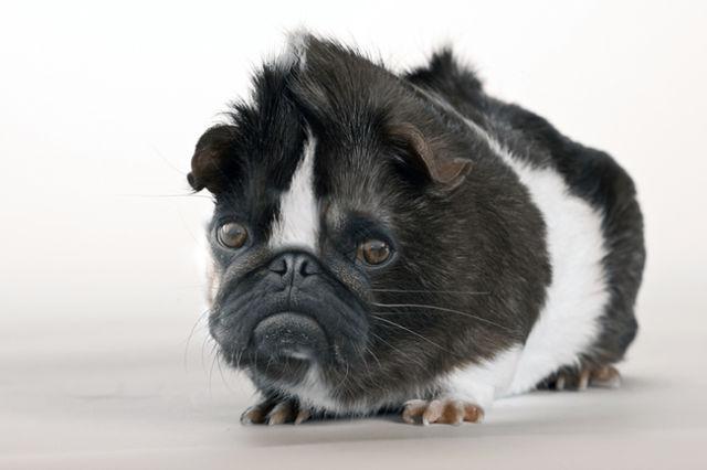 Funny Dog Cross Breeds