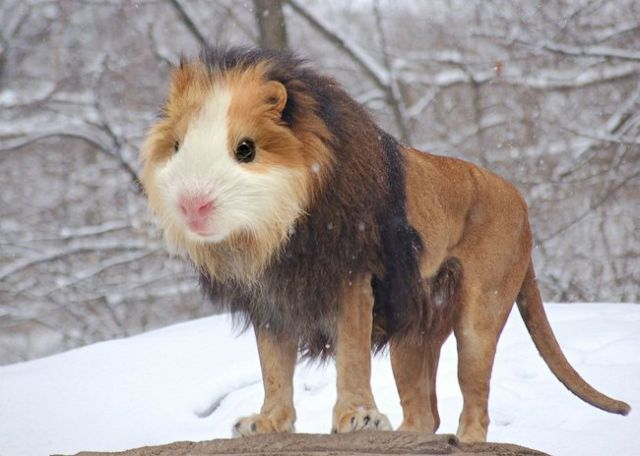 Bizarre Animal Mashups That Are Cute and Creepy at the Same Time