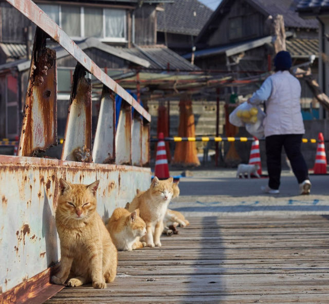 An Island of Cats in Japan