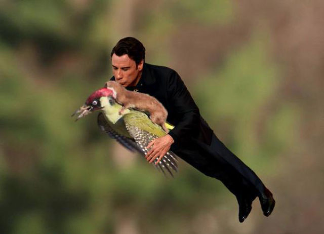Hilarious Memes of the Weasel Riding the Woodpecker