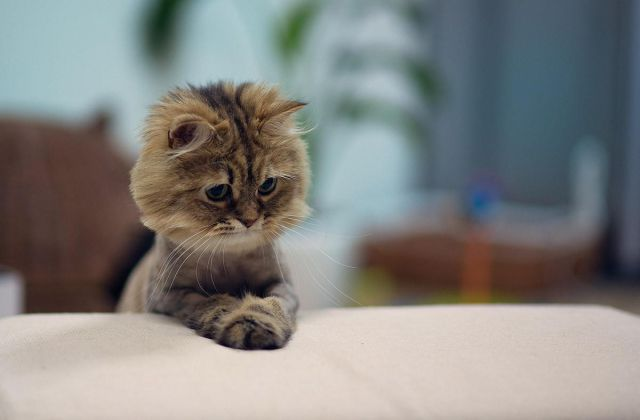 The Cutest, Coolest and Craziest Cat Photos Ever Taken