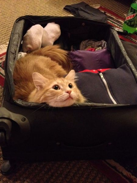 Your Pets Know When You are Planning a Holiday without Them