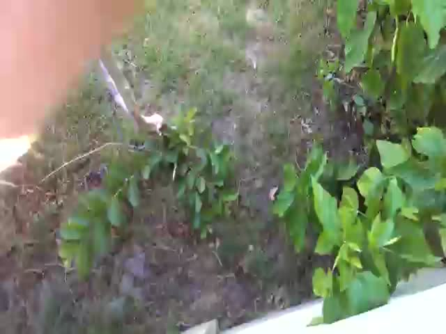 How to Retrieve a Ball from Your Neighbor's Yard Using a Dog