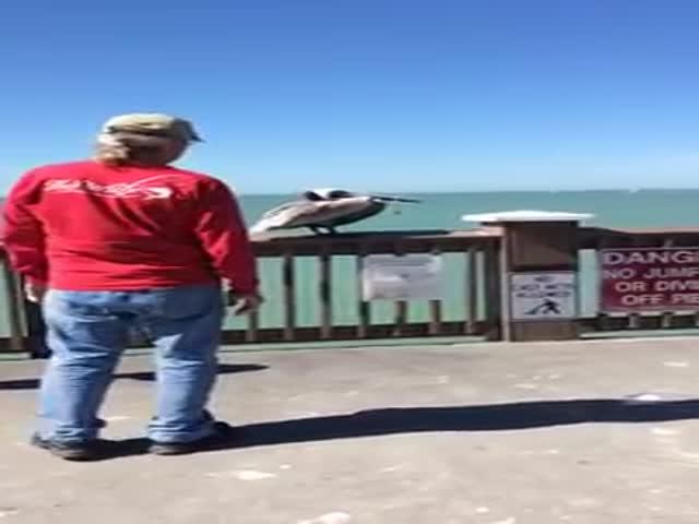 Man Saves Pelican with Fishing Wire around its Beak