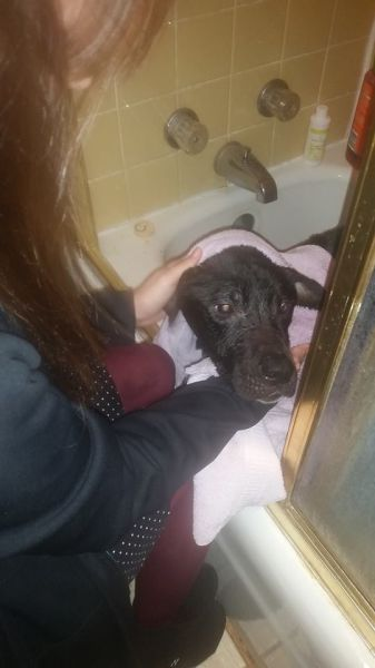Happy Ending for Abandoned Dog