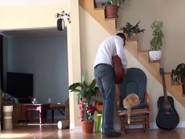 A-hole Cat Owner Receives Some Beautiful Instant Karma