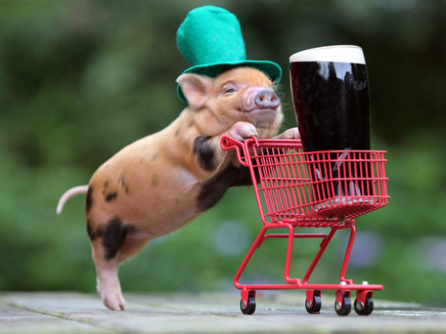 Adorable Animals Who Are in the St Paddy's Day Spirit