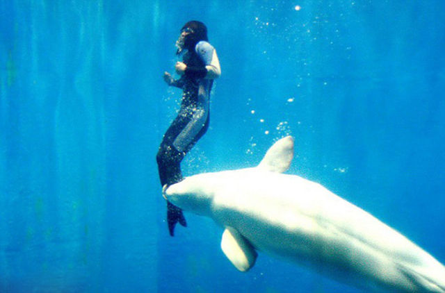 The Incredible Moment When a Whale Rescues a Diver