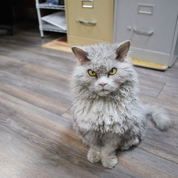 This Is One Cat I Wouldn't Mess with