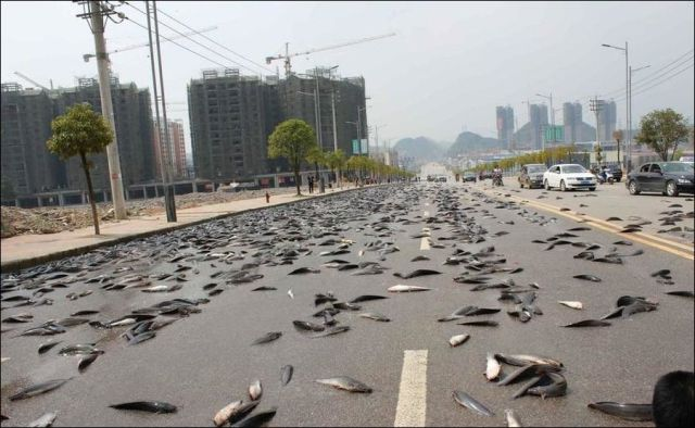 A Fishy Motorway in China