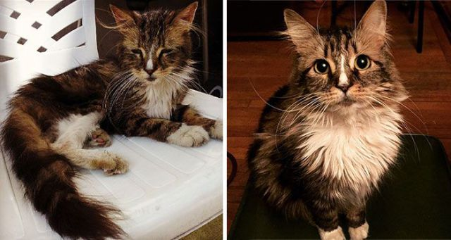 Rescued Cats Get a New Lease on Life